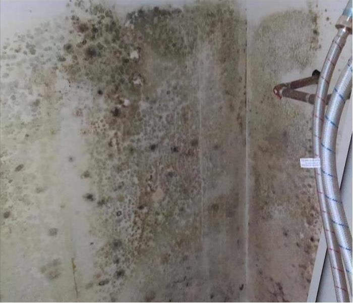 Mold Remediation The Value of Mold Certification