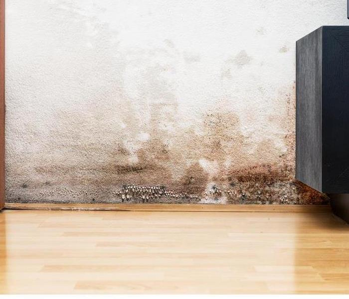Mold Remediation What Makes Mold Grow in My House?