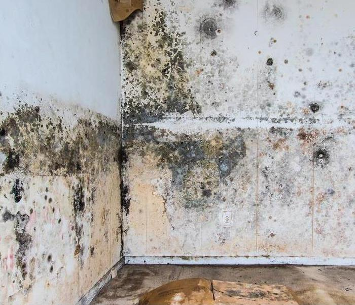 Commercial Common Places To Find Mold in a Commercial Building