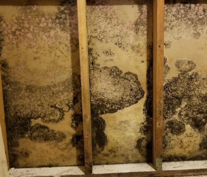 Mold Remediation Help! Is Mold Covered by My Business Insurance Policy?
