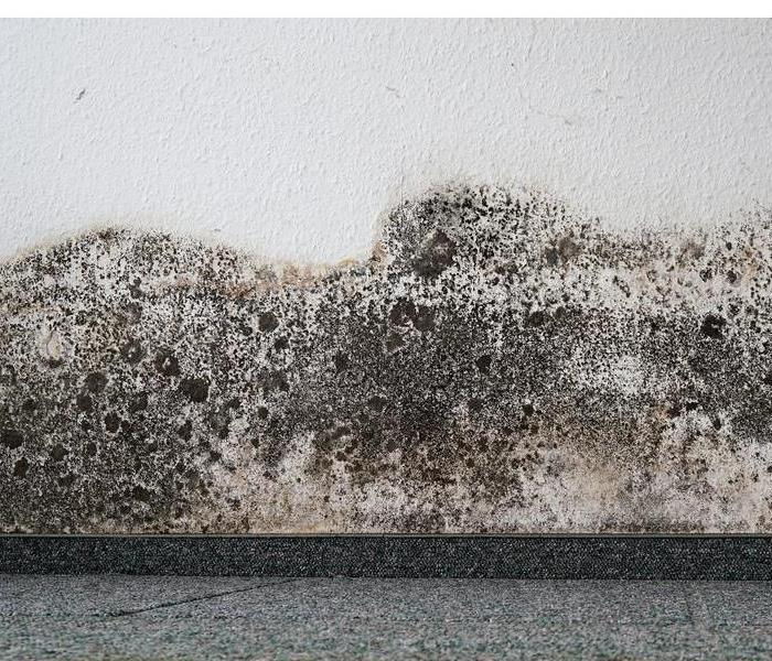 Mold Remediation How To Find Whether Your Basement Needs Mold Remediation